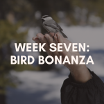 Week Seven: Bird Bonanza